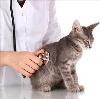Ветеринарные клиники в Торопце